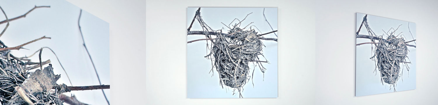 Ryan Livingstone Canadian Artist Sculptor Photograph of Found Nests Aluminum Contemporary Art From The Landscape Toronto New Brunswick Art Inspired by Our Relationship with Nature November Death Symbols of Life and Death Resembling The Heart