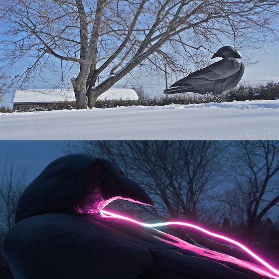 Ryan Livingstone Canadian Artist Sculptor Contemporary Art Crow Harbinger Sculpture Glass Neon Sculpture Outdoor Art Garden Art From The Landscape Toronto New Brunswick Art Inspired by Our Relationship with Nature