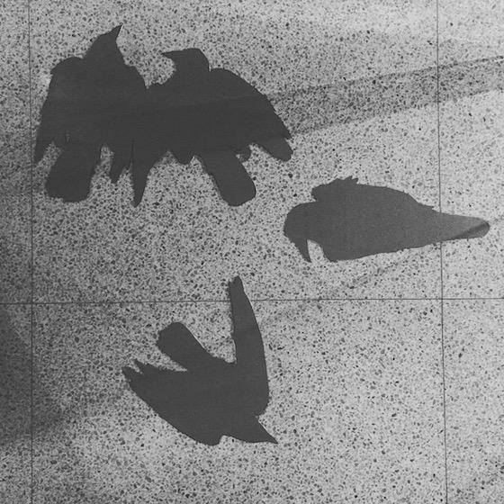 Ryan Livingstone Canadian Artist Sculptor Etching Zinc Plate Contemporary Art Dead Crow Sculpture Crow From The Landscape  Toronto New Brunswick Art